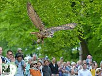Flugshow im Wildpark Müden. © Wildpark Müden