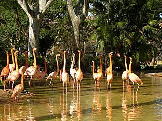 Flamingos im Zoo Barcelona © Oh-Barcelona.com