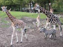 Visión general: Zoo Emmen