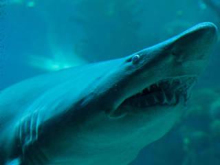 Das New England Aquarium in Boston © New England Aquarium