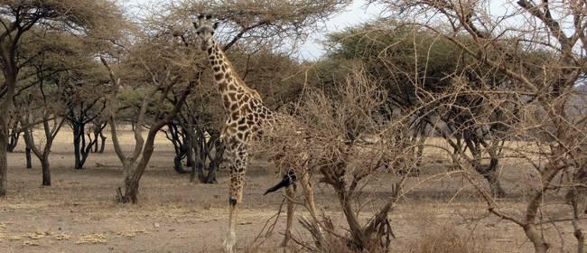 Destinos, actividades recomendables de ocio y excursiones de un día en África